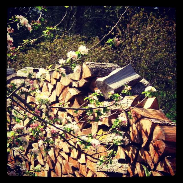 Woodpile at the Coast